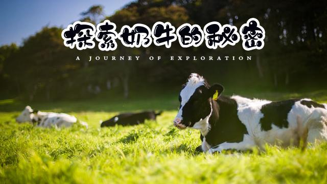 化身小小饲养员,喂养小萌牛,近距离接触奶牛妈妈探寻牛奶的秘密